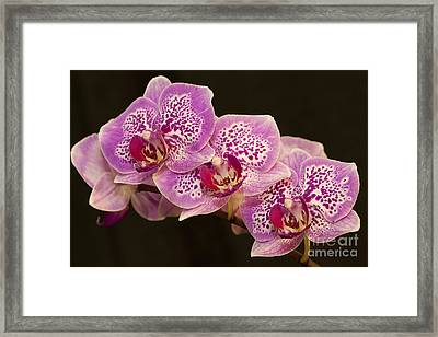 Framed Print featuring the photograph Orchids by Eunice Gibb