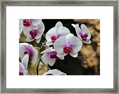 Orchids For Your Day Framed Print by Timothy Johnson