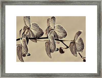 Orchids In Raw Umber Framed Print by Kathy Clark