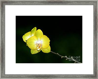 Orchids To The Left Framed Print by Sabrina L Ryan