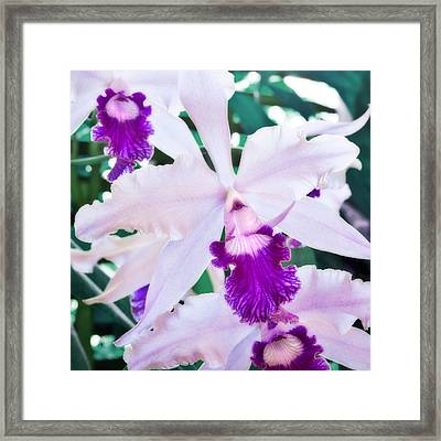 Framed Print featuring the photograph Orchids White And Purple by Steven Sparks