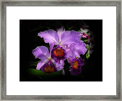 Orchidstral Beauty Framed Print by Blair Wainman