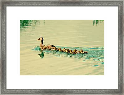 Order Of Beauty Framed Print