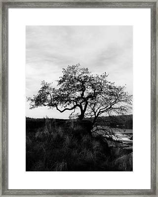 Oregon City Tree Framed Print