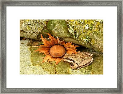 Oregon Combo Framed Print by Jean Noren
