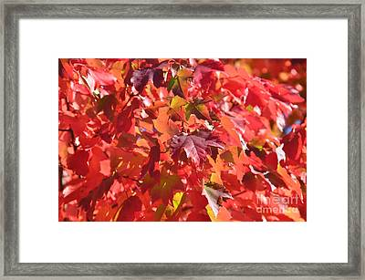 Framed Print featuring the photograph Oregon Red by Mindy Bench