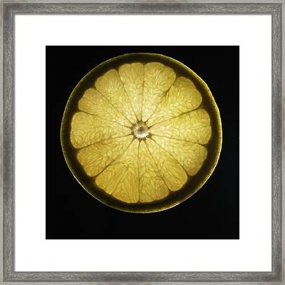 Organic Grapefruit Framed Print by Monica Rodriguez
