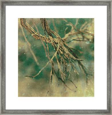 Organic Framed Print by Mark  Ross