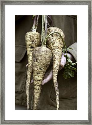 Organic Parsnips Framed Print by Maxine Adcock