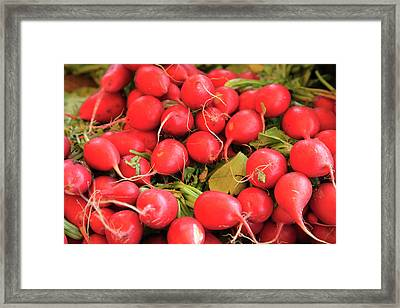 Organic Radishes Framed Print by Wendy Connett