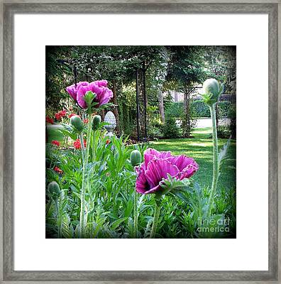 Framed Print featuring the photograph Oriental Poppies by Tanya  Searcy