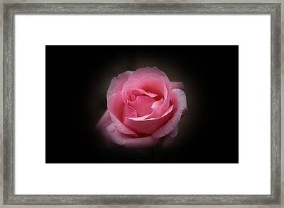 Framed Print featuring the photograph Original Rose Petals by Anthony Rego