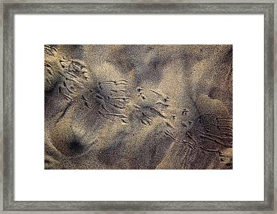 Orithography Framed Print by George Crawford