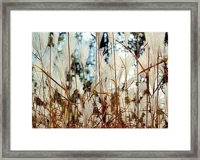 Ornamental Grass Framed Print by Bridget Johnson