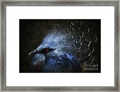 Ornamental Nature Framed Print by Andrew Paranavitana