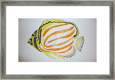 Ornate Butterfly Fish Framed Print by Tim Forrester