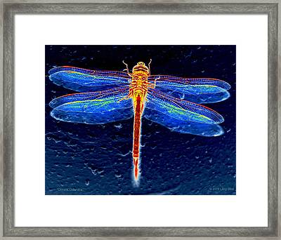 Ornate Odonata Framed Print
