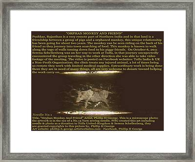 Orphan Monkey And Friends  Framed Print by Phillip H George