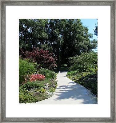 Oshawa Botanical Garden 4 Framed Print by Sharon Steinhaus