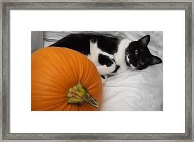 Oslo And The Pumpkin Framed Print by Marian Hebert
