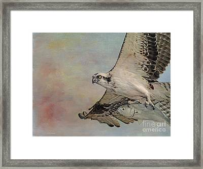 Osprey And Fish Framed Print by Deborah Benoit