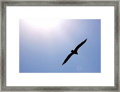 Osprey And The Sun Framed Print by Don Mann