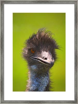 Ostrich Framed Print by Carson Ganci