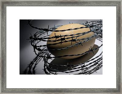 Ostrich Egg Surrounded By Barbed Wire Framed Print by Sami Sarkis