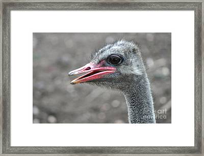 Ostrich Head Framed Print