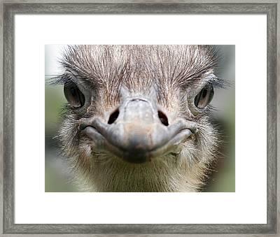 Ostrich Quizical Framed Print