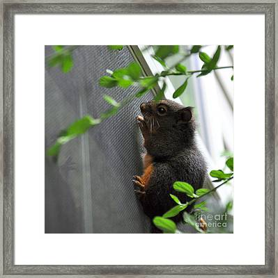 Other Side Of The Window Framed Print by Tanya  Searcy