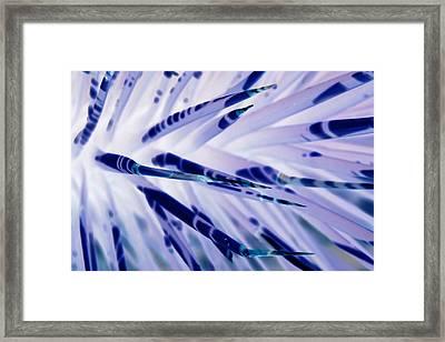 Framed Print featuring the photograph Other World I by Carolina Liechtenstein