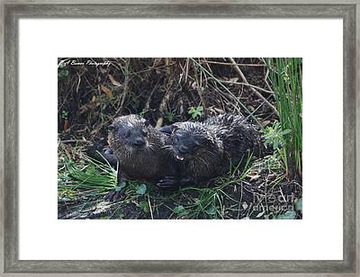 Otter Couple Framed Print