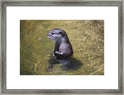 Otter Portrait Framed Print by Ronald T Williams