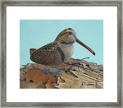 Our American Woodcock Framed Print