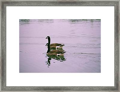 Out For A Date Framed Print by Timothy Turner