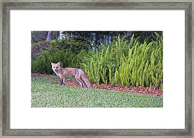 Out For A Stroll Framed Print by Donna Proctor