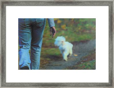 Out For A Stroll Framed Print by Karol Livote