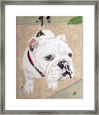 Out For A Walk. Framed Print