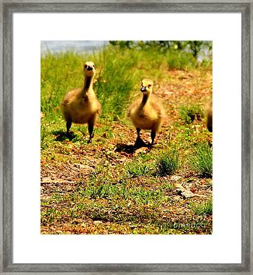 Out For A Walk Framed Print