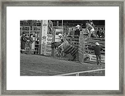 Out Of The Chute Framed Print