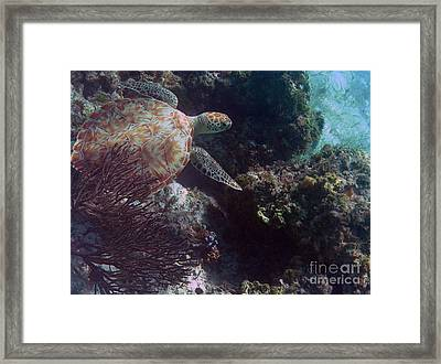 Out Of The Darkness Framed Print by Li Newton