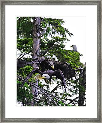 Out Of The Nest Framed Print