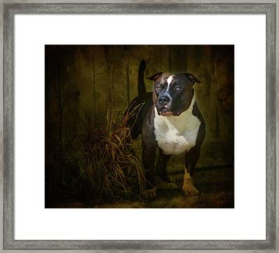 Out Of The Shadows Framed Print by Larry Marshall