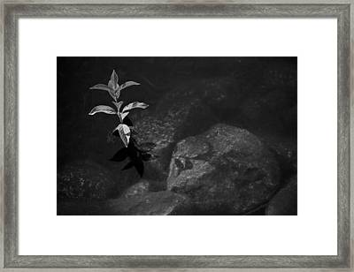 Out Of The Water Comes Shadows Bw Framed Print by Karol Livote