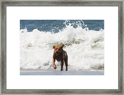 Out Of The Waves Framed Print by Renae Laughner