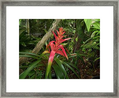 Out Of This World Framed Print by Sheila Silverstein