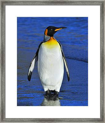 Out Of Water Framed Print by Tony Beck