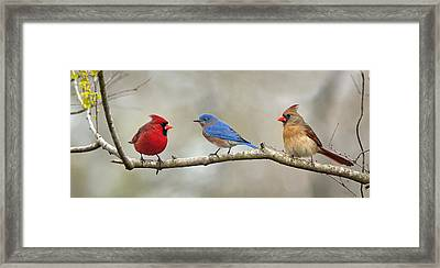 Out On A Limb . . . Framed Print by Bonnie Barry