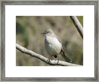 Out On A Limb Framed Print by Bonnie Muir
